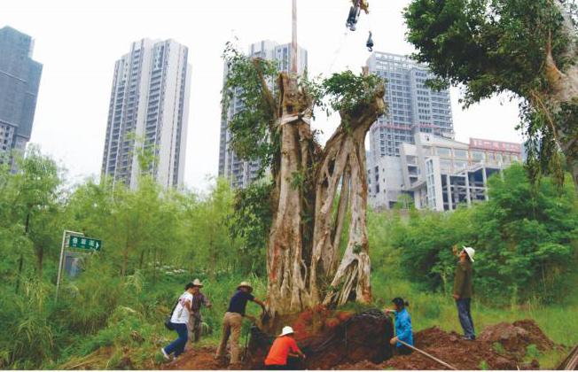 园林绿化施工