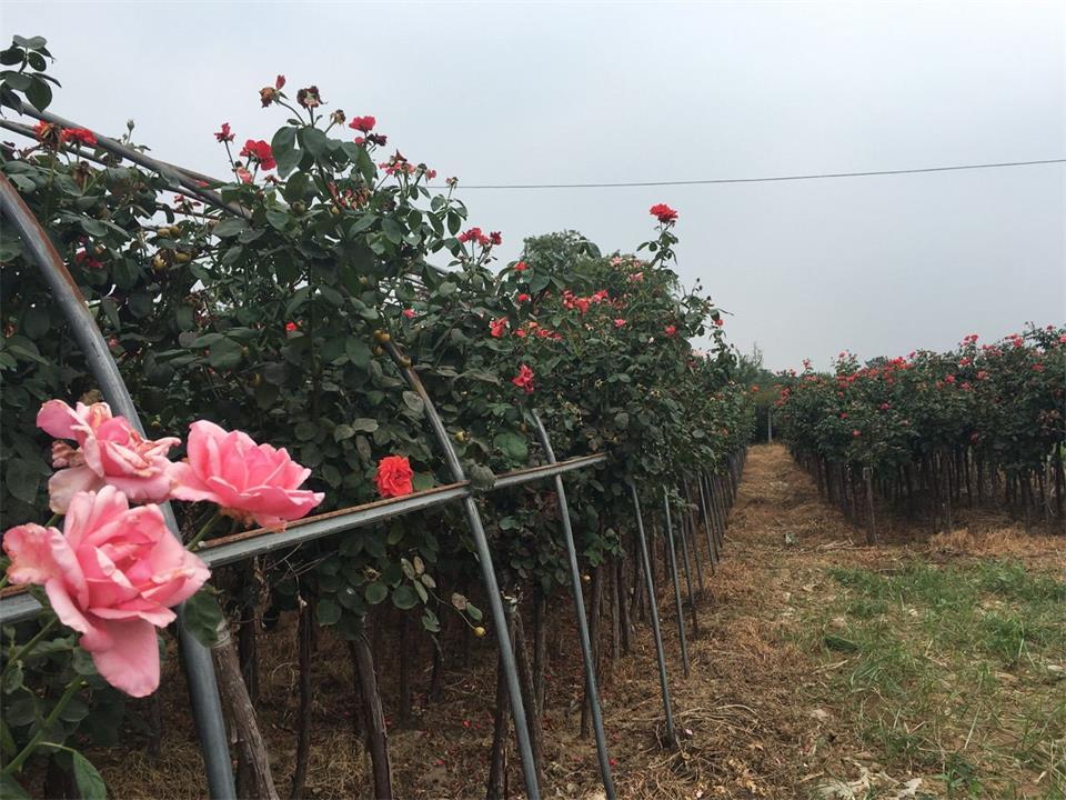 yabovip28花卉协会赴外省考察